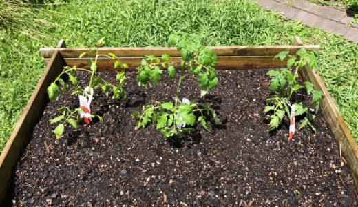 畑の作業。種蒔きとトマトの苗植え